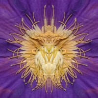 http://www.carolinanitsch.com/files/gimgs/th-21_21_purple-insect-large-12x12lores.jpg