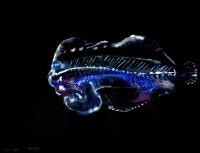 http://www.carolinanitsch.com/files/gimgs/th-291_ROC-0019-Untitled-Flounder-2_v2.jpg