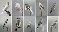 https://www.carolinanitsch.com/files/gimgs/th-118_118_hoe-000-birds-complete-2rows.jpg