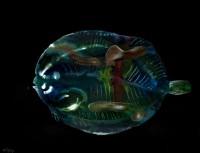 https://www.carolinanitsch.com/files/gimgs/th-291_ROC-0018-Untitled-Flounder_v2.jpg