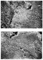https://www.carolinanitsch.com/files/gimgs/th-46_46_wall-jeff-rock-surface.jpg